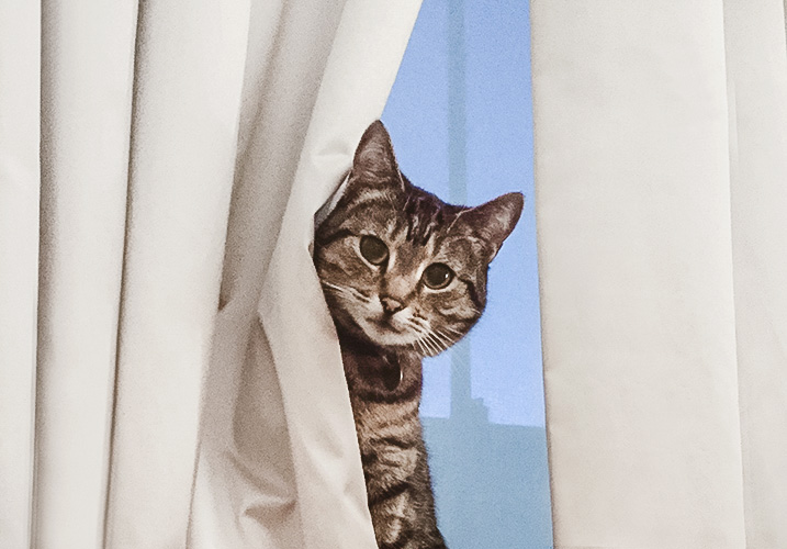 Cat long made to measure pinch Pleat curtains